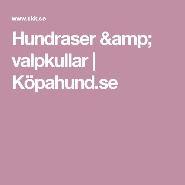 Hundraser & valpkullar | Köpahund.se