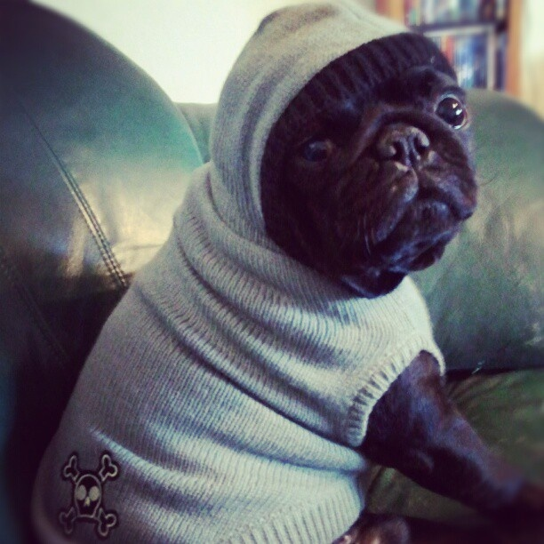 732 best just cute fuzzy images on pinterest pug pug dogs and pugs pug life thecheapjerseys Image collections