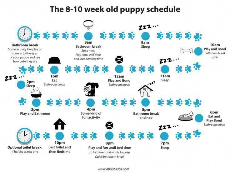 First Week With Puppy Schedule 2021