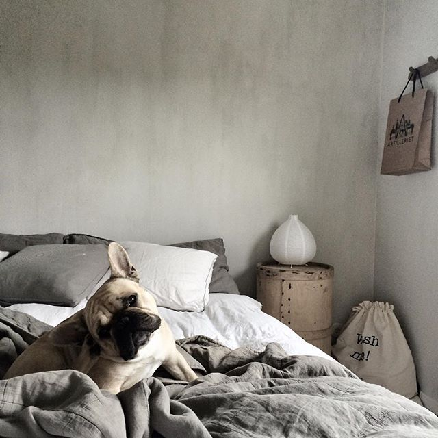 """""""Come back to Bed!"""", French Bulldog"""