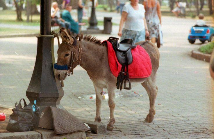 burro, ослик, пленка