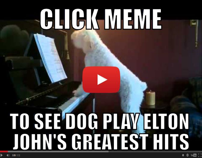 Dog Plays Piano and Sings When Owner Leaves