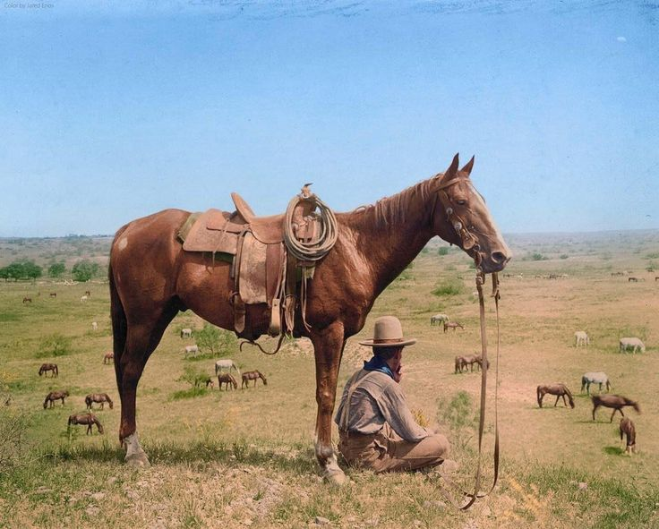 A cowboy of the American Frontier in Bonham Texas June 1910. Colorized by Jared Enos. http://pic.twitter.com/TOvjdGprNb   Lost In History (@HistoryToLearn) November 29 2017