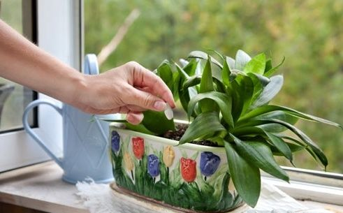 Натуральные средства для растений