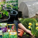 Do 6 of These Things in February To Have a Great Garden in Spring | February Gardening