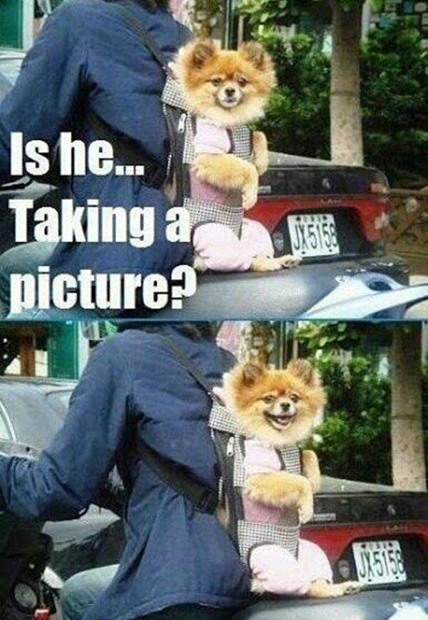 Kiss Me Meme Funny : Best images about funny dogs on pinterest