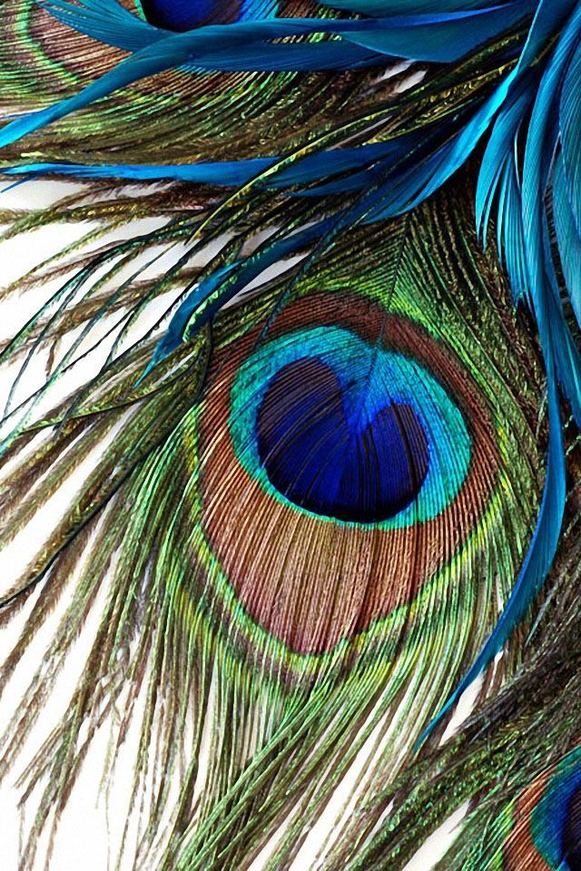 Pin By Usha Gopinathan On Peacock Feather Wallpaper