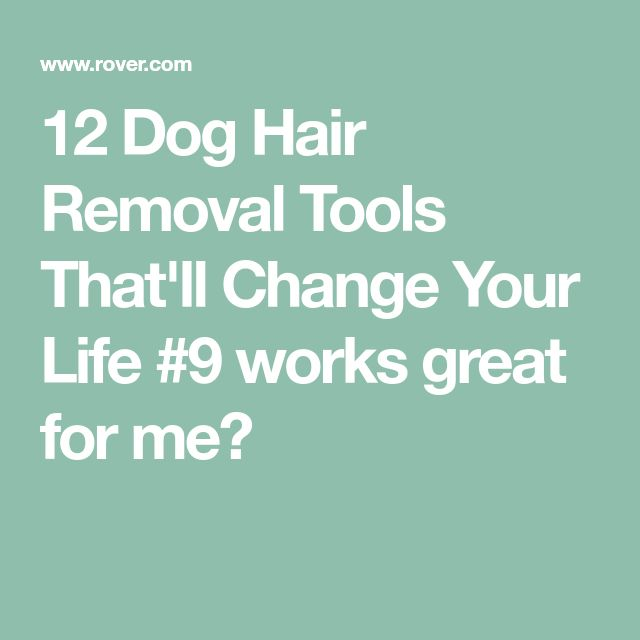 12 Dog Hair Removal Tools That'll Change Your Life  #9 works great for me👍