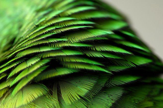 Nature produces some amazing colours