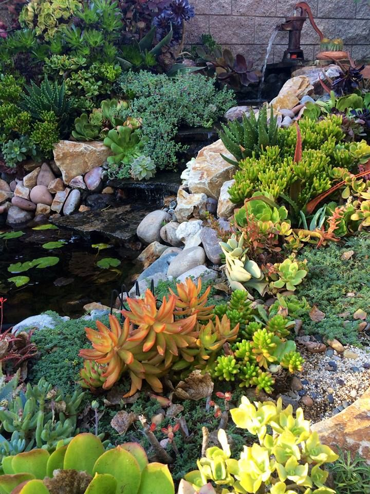 58 best images about design for serenity on pinterest for Garden design with succulents
