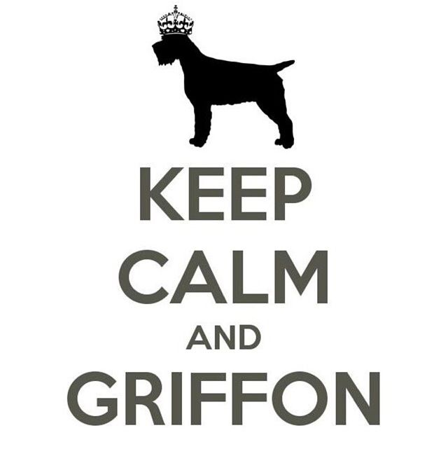 Wirehaired Pointing Griffon / Korthals Griffon