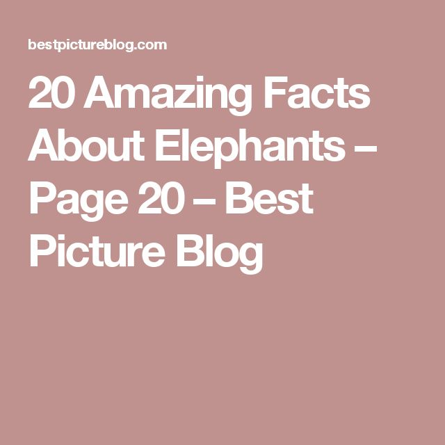 20 Amazing Facts About Elephants – Page 20 – Best Picture Blog