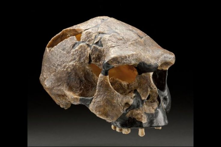 Human fossil findings in indonesia