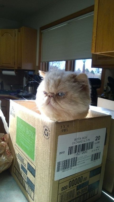 """19 Cats Who Have Absolutely Had It 