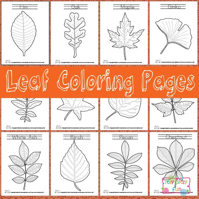 Leaf Coloring Pages free!