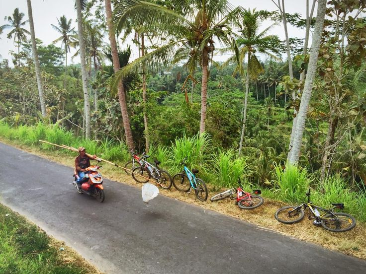 Jegeg Bali Cycling Tours, Ubud: See 562 reviews, articles, and 347 photos
