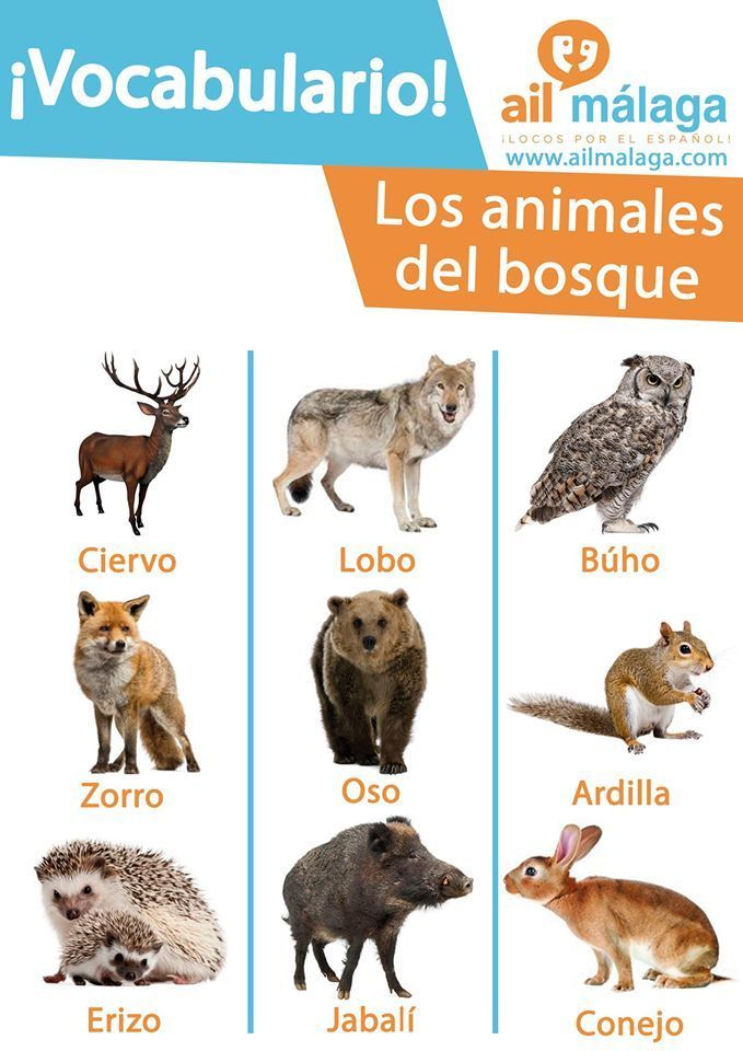 Animals That Live In The Forest Learnspanish Spanishschool Spanishvocab Learning Spanish Spanish Animals Spanish Vocabulary
