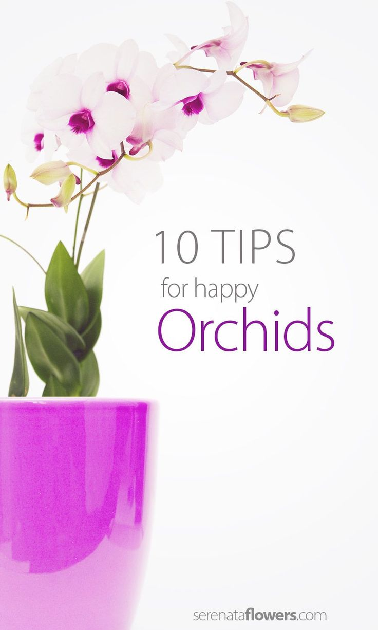 tips-for-happy-orchids