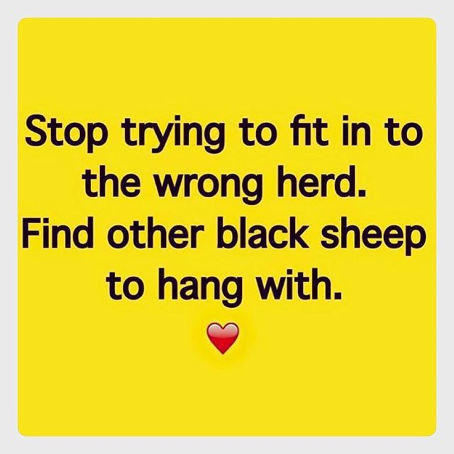 YOU || Be a black sheep.... Trust me it's much more fun.  #theflexifoodie by juliemontagu
