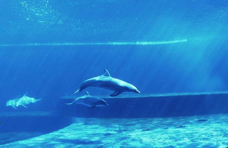 Goccia, la cucciola di delfino nata all'#AcquariodiGenova  Goccia, the dolphincub  born at the Acquario di Genova  #AcqurioVillage #tourism #leisure #genovamorethanthis #italy #dolphins #delfini