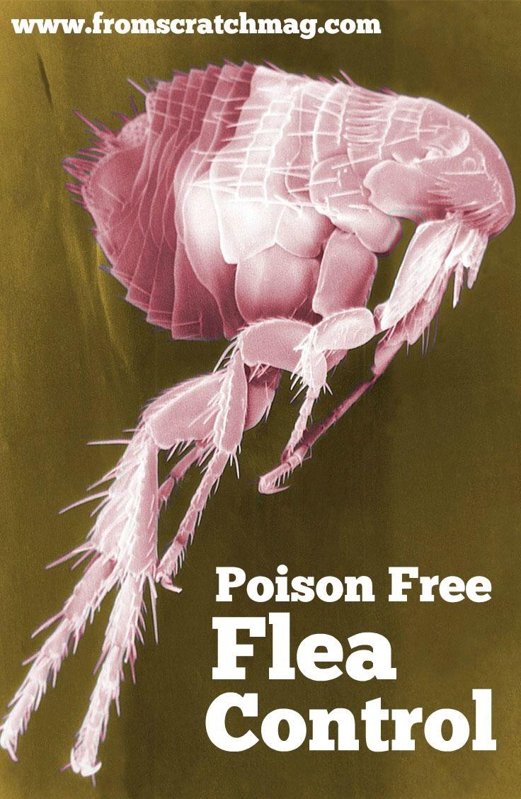 poison free flea control
