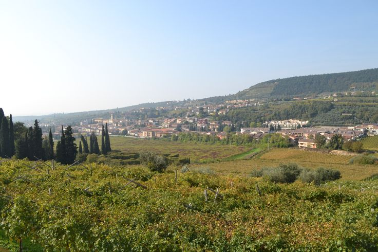 The view from our rooms! Relax in the Valpolicella land!  http://www.amaronevalpolicella.org/vogadori-family/bed-and-breakfast-negrar