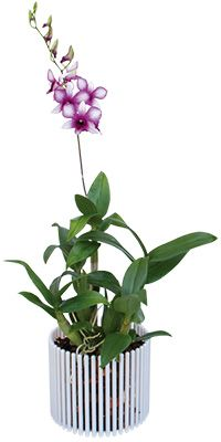 Orchitop Carousel Orchid Pot