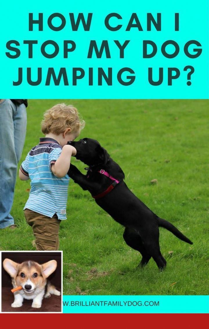 Persistent Suggested Dog Training For Obedience Buy Now Pay Later