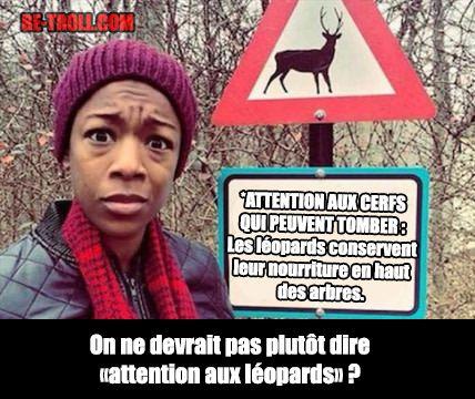 Attention aux cerfs ! - Be-troll - vidéos humour, actualité insolite
