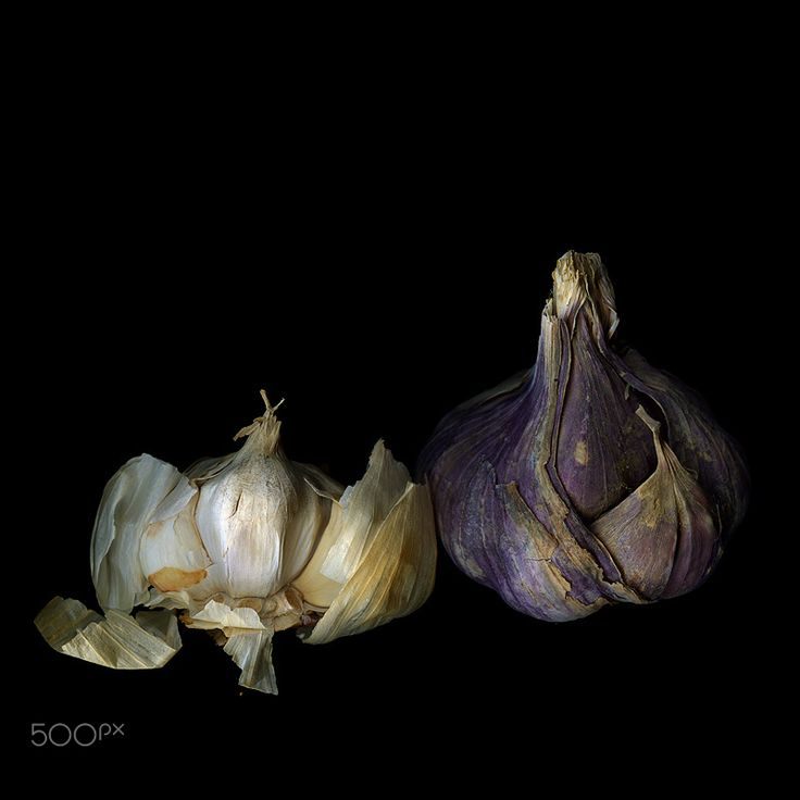 A GARLICKY STORY of TWO... - There may be upwards to six-hundred types of garlic being grown world-wide. One 'YORKSHIRE GARLIC' and 'A Mild French'Silverskin Garlic (softneck).  Although it may seem a new concept, garlic was in fact introduced to Britain by the Romans and has been a cook's staple for millennia. The bulbous vegetable was praised in ancient Sanskrit writings, the Egyptians buried it with their dead and by 1500BC it had spread across the world – it even turned up in the…
