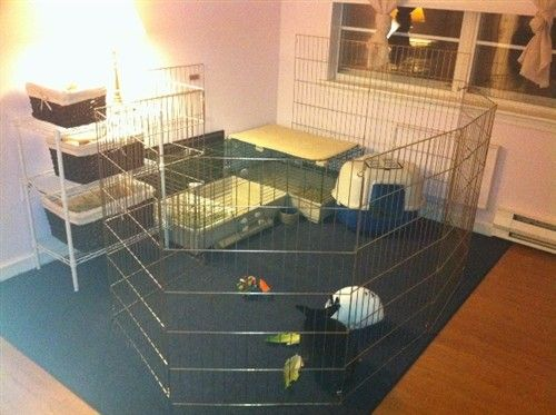 Another Quot Puppy Pen Quot Based Indoor Setup Showing How Simple