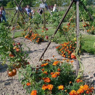 les 15 meilleures id es de la cat gorie tuteur tomate sur pinterest permaculture horticulture. Black Bedroom Furniture Sets. Home Design Ideas