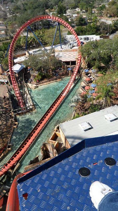 439 best images about rollercoasters and other themepark - Busch gardens tampa roller coasters ...