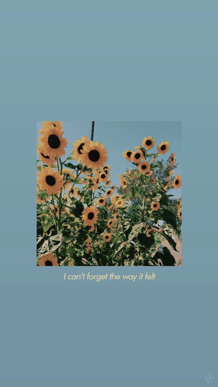 cute lockscreen  – Vivi🌻💭