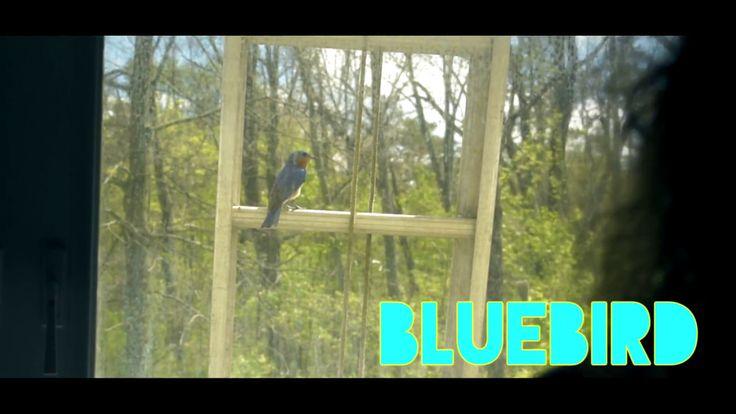 """Bluebird"" - A Hart Island Production (2017)"
