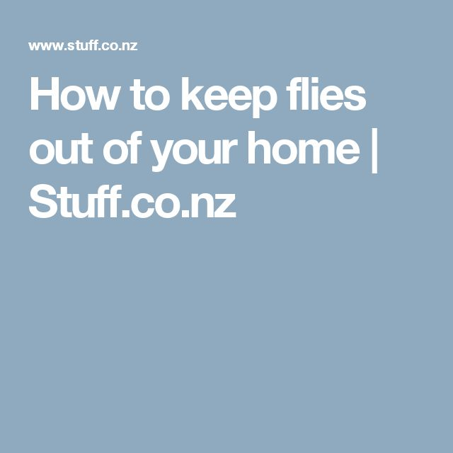 How to keep flies out of your home | Stuff.co.nz