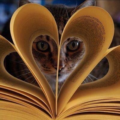 cat heart: Cats, Books, Animals, Kitty Cat, Kitten, Heart, Pet, Kitty Kitty, Photo