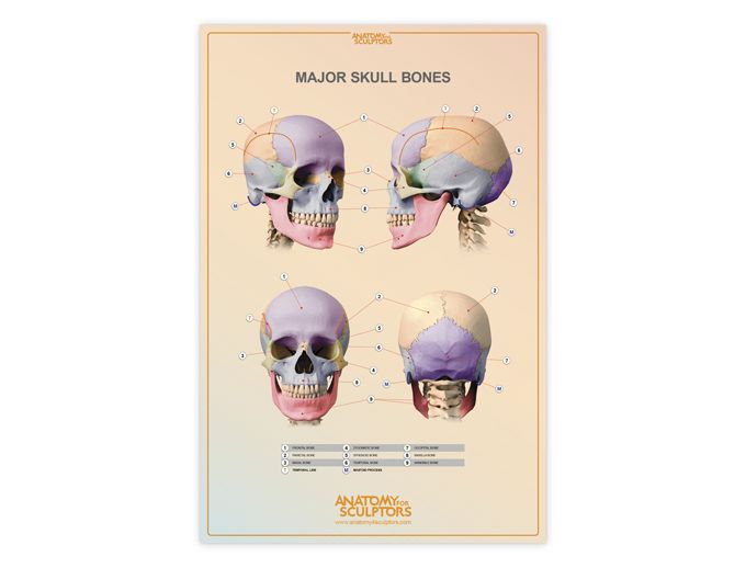 19 best Ref - Head Reference images on Pinterest | Human head ...