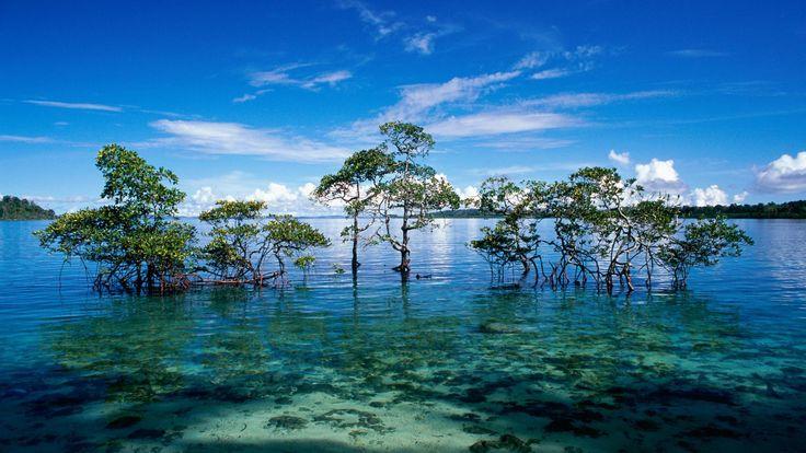 Water trees, Andaman and Nicobar Islands
