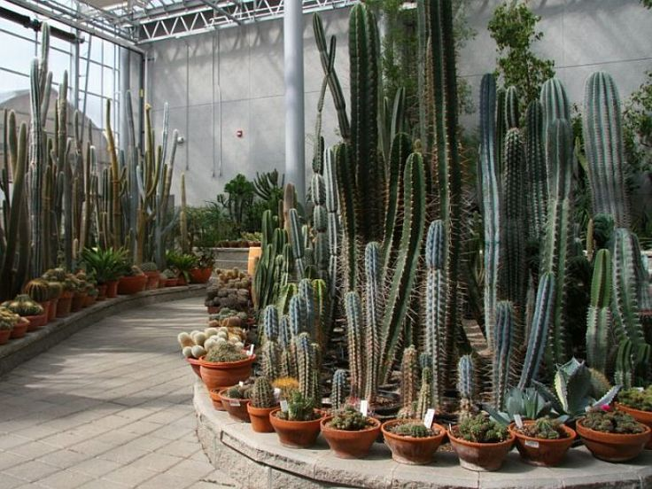 56 Best Images About Cactus Garden Ideas On Pinterest | Gardens