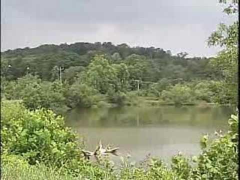 Oceana in the News: Olin Plant Under Fire For Mercury Poisoning https://www.youtube.com/watch?v=K7v8CapGUi8