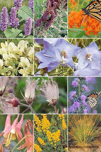 Pre Planned Flower Garden Designs: Best 25+ Deer Resistant Garden Ideas On Pinterest