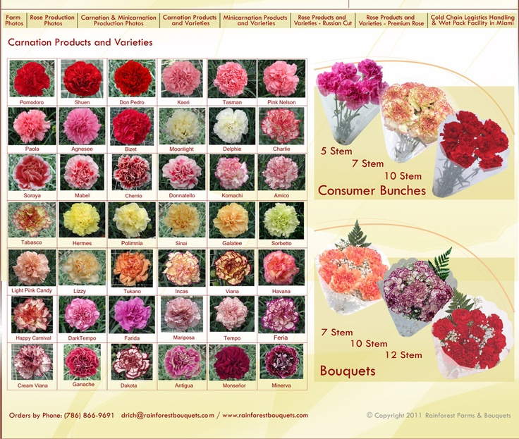 carnation varieties red pink white yellow peach purple green - Carnation Flower Colors