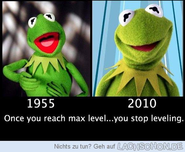 Kermit der Frosch - leveling,frosch,kermit,stop