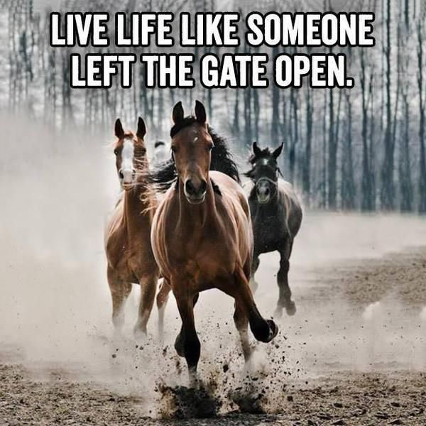 Live Like Someone Left The Gate Open Quote: 25+ Best Horse Quotes On Pinterest