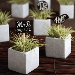 Airplane plant favors with little chalk board signs, add a purple ribbon or use stained terra cotta pots and perfect color scheme match