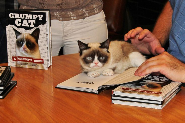 This Is What Grumpy Cat Would Look Like If She Wasn't Grumpy