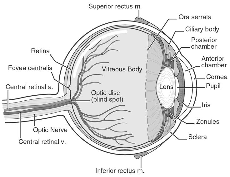 Human Eye Diagram Labeled - Health, Medicine and Anatomy Reference ...