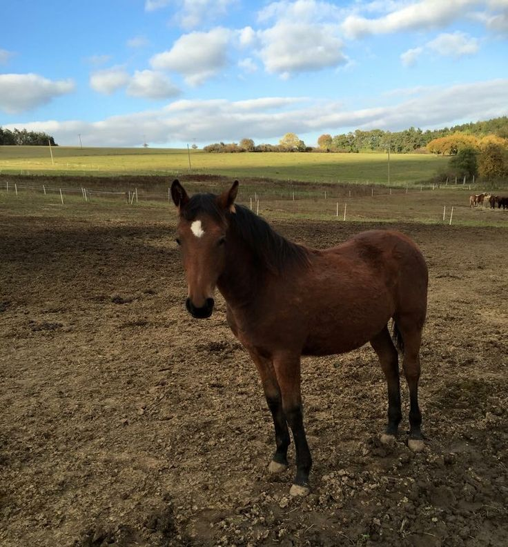 Novi is our lovely junior mare #foal #horse #8months #Novi #loveher