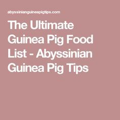 The Ultimate Guinea Pig Food List - Abyssinian Guinea Pig Tips